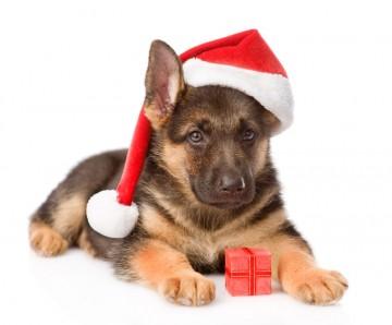 Make MORE Sales this Holiday Season!