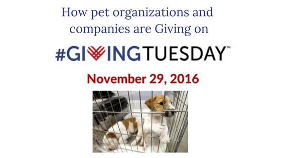 How to help Pets on #GivingTuesday