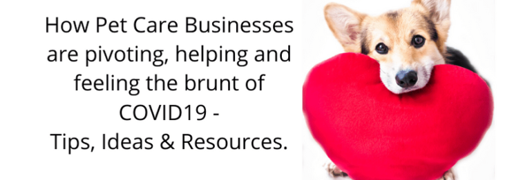 How pet care businesses are pivoting, helping and feeling the brunt of COVID19