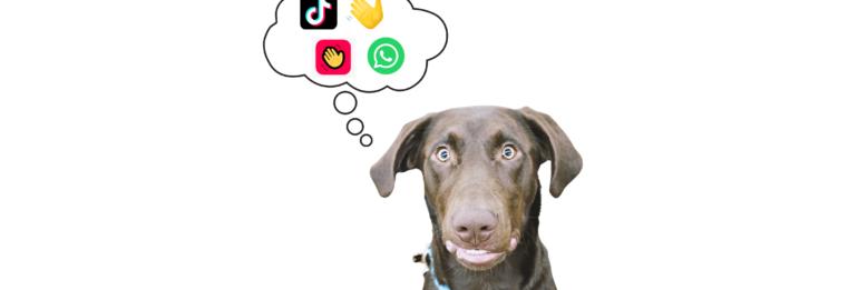 New Social Media Platforms for Your Pet Business?